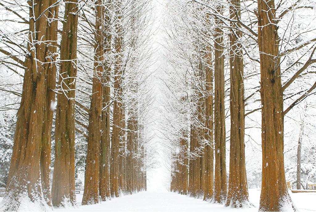 桦树图片一年四季