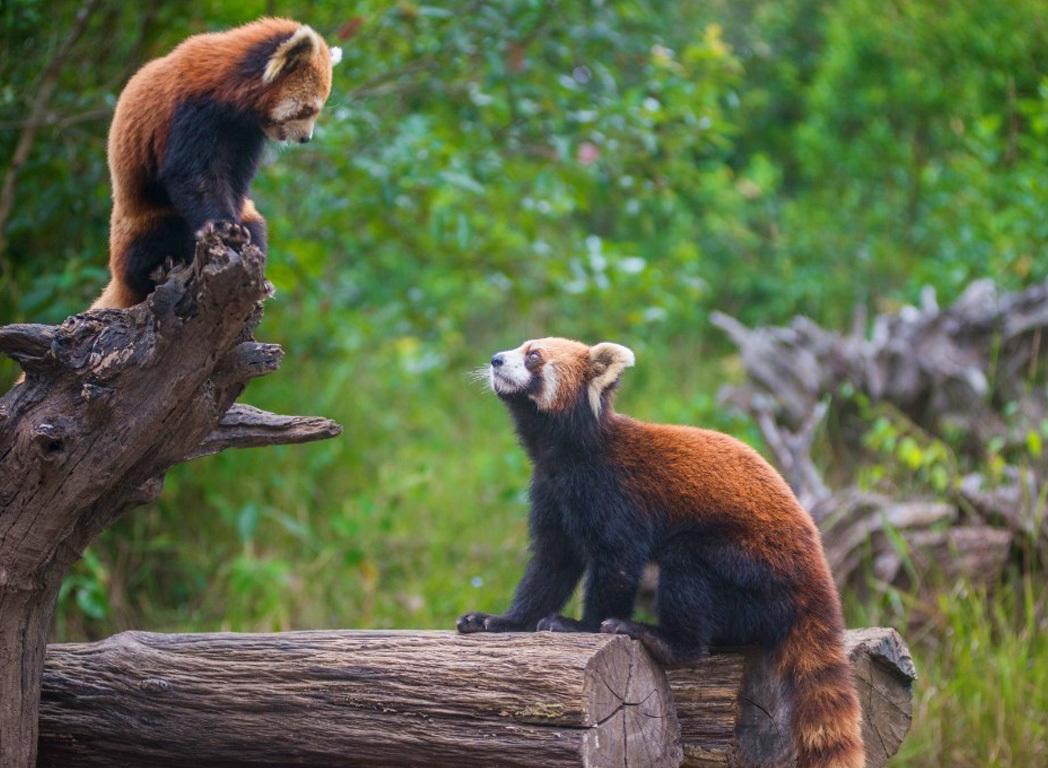 """中国云南省的西双版纳是北回归线沙漠带上唯一的一块绿洲,是中国最大的热带雨林原始森林公园,也是当今地球上少有的动植物基因库。她美丽、富饶、神奇、犹如一颗璀灿的明珠镶嵌在祖国的西南边疆。西双版纳位于云南省景洪县内,地处滇南。由于受印度洋西南季风和太平洋东南季风的影响,西双版纳的气候有高温多雨的特点。现在的西双版纳自治州包括首府景洪市、勐海、勐腊两县。西双版纳古称勐泐是傣语记音。""""."""