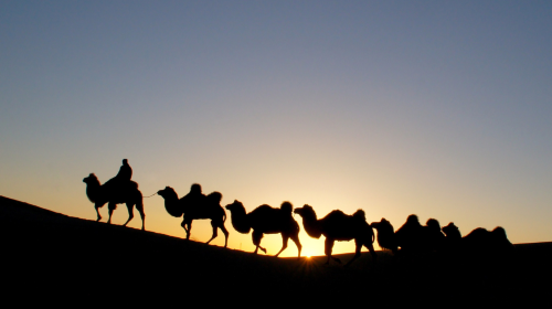 新疆—吐鲁番骆驼