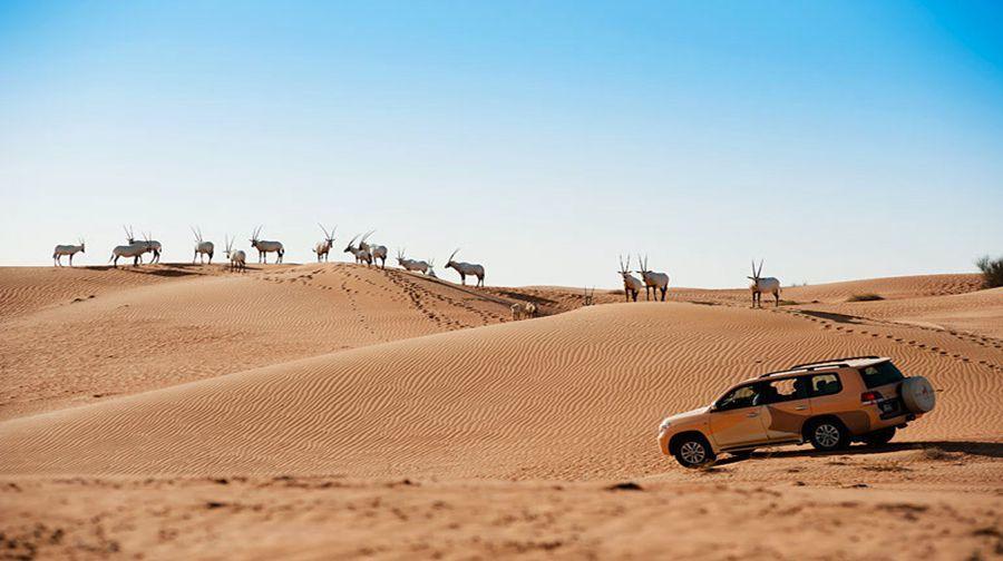 自然探索·迪拜沙漠酒店探险+亚特兰蒂斯海洋世界