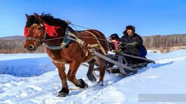 哈尔滨哪有卖冰上玩的爬犁的?