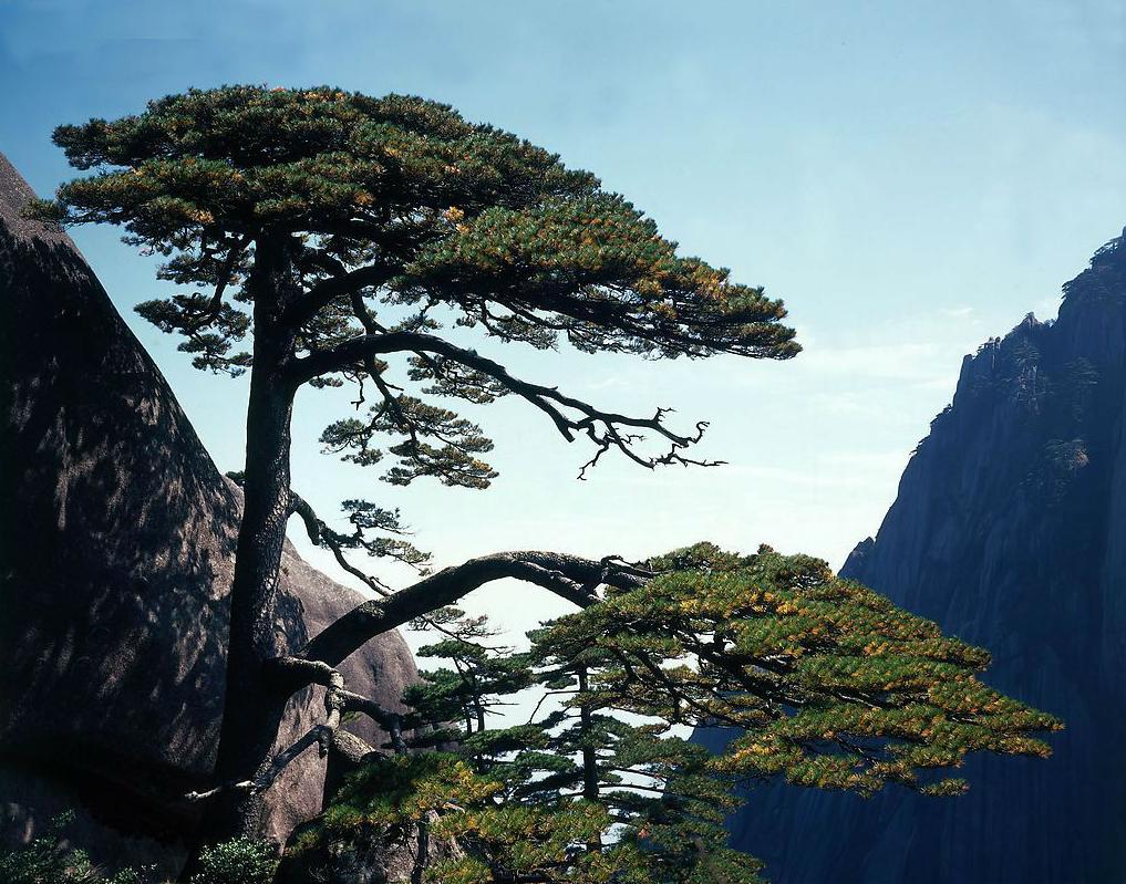 苏州到青岛旅游,玄武到青岛旅游攻略,线路报价攻略岛剑灵苏州图片