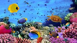 美丽之海水族馆
