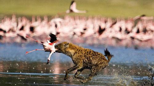【动物大迁徙全追踪】坦桑尼亚+肯尼亚10天7晚·塞伦