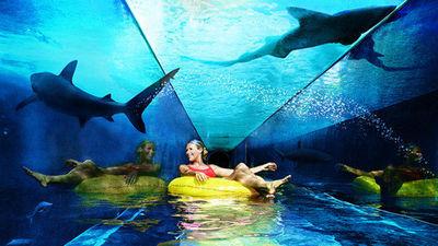 壁纸 海底 海底世界 海洋馆 水族馆 桌面 400_225