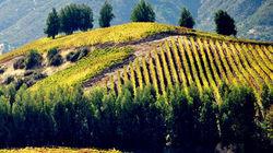 中央山谷的葡萄酒庄