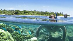 Vomo 寻觅珊瑚礁