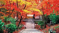 常寂光寺的秋景