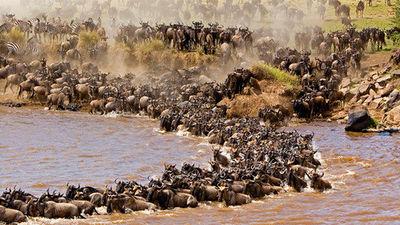 【动物大迁徙】野趣肯尼亚10天7晚·火烈鸟+马赛