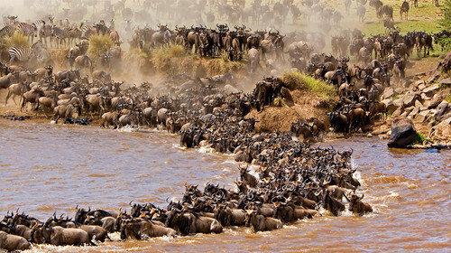 【动物大迁徙】野趣肯尼亚10天7晚·火烈鸟+马赛马拉