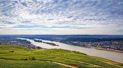 莱茵河畔的葡萄园