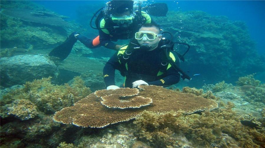 海南三亚+南湾猴岛+槟榔谷+分界洲岛5日4晚跟团游
