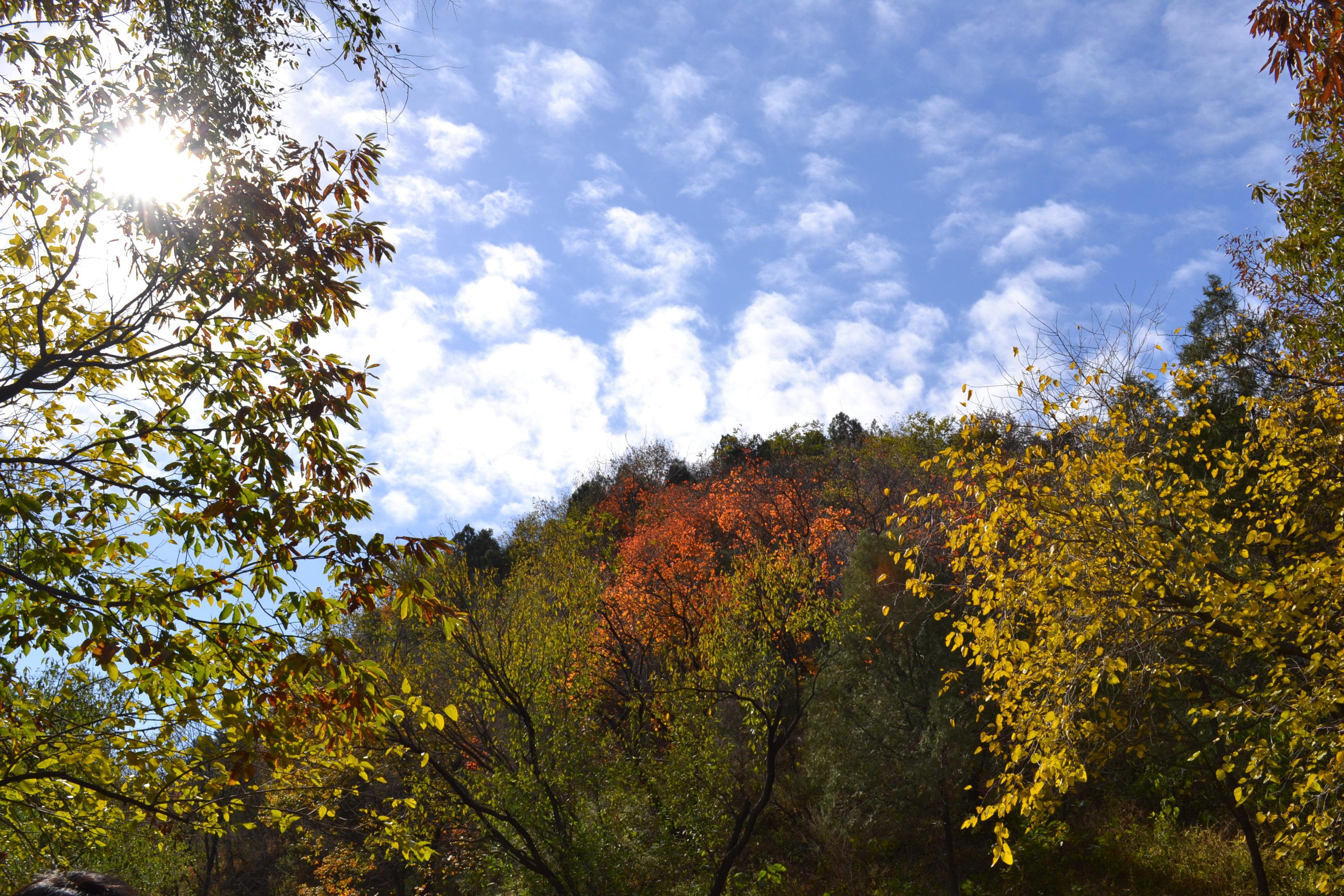 【特惠亲子游】北京百望山森林公园赏红叶一日游·特卖汇