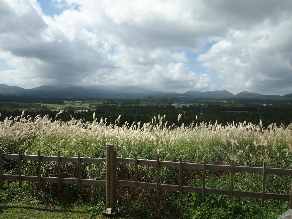 济州岛,此景点强推,可以看到大片大片的紫芒,随便一拍都像画报,游览