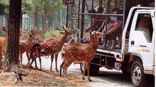 北京大兴野生动物园汽车一日游·天津出发