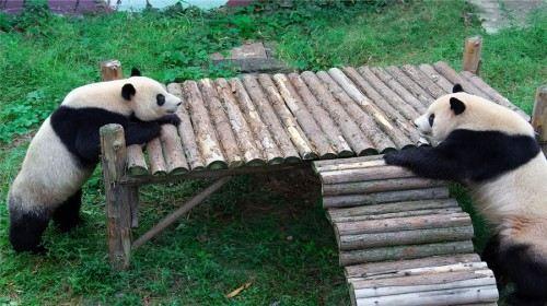 无锡动物园·太湖欢乐园门票(在线支付)