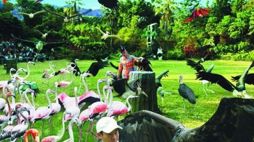 晚跟团游·长隆野生动物园+长隆欢乐世界+纯玩不进店