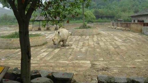 杭州野生动物园 西湖自由活动巴士一日游