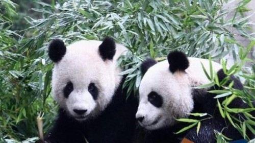 杭州2日1晚跟团游·西湖,宋城,野生动物园2日游