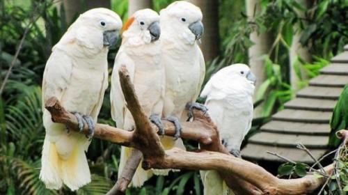 广州长隆野生动物园+欢乐世界+珠海海洋王国