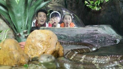 乐园游·广州 长隆4日3晚跟团游·长隆野生动物园,水上乐园,海洋王国