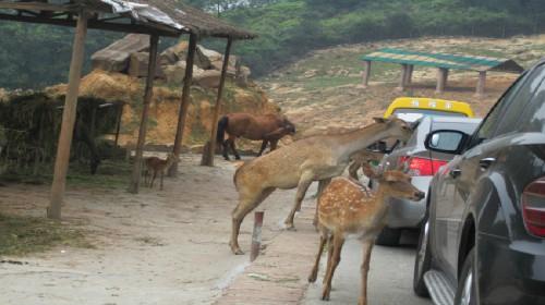 永川2日1晚跟团游·乐和乐都野生动物世界,娱乐天堂双园一日游