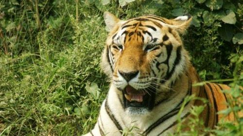 上海3日2晚跟团游·野生动物园+东方明珠+中国馆科