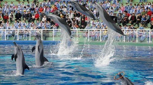 深圳野生动物园13