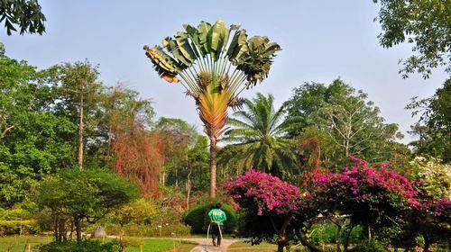 西双版纳-勐仑植物园2