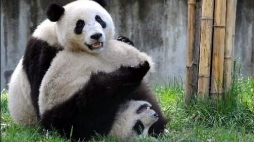 台北动物园,看团团圆圆