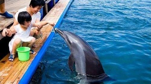 分界洲岛海豚湾