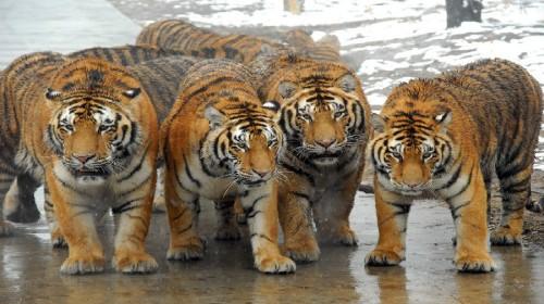 秦岭野生动物园(景点付款) 点评详情