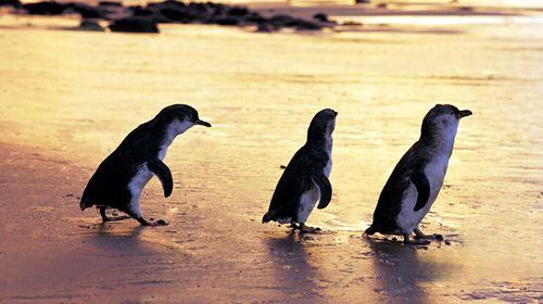 企鹅图片大全可爱