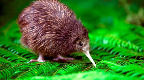 澳大利亚悉尼 新西兰奥克兰15日跟团游· 生态双遗产