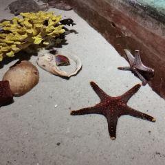 Seabed World User Photo