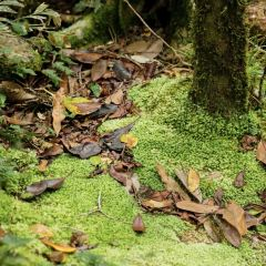 Mossman Gorge User Photo