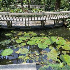 中國科學院華南植物園用戶圖片