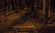 柳岸野生动物保护区-基督城-zhulei831230
