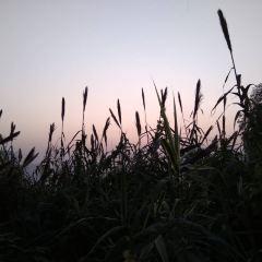 샤후공원 여행 사진