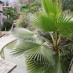 花水湾温泉リゾートエリアのユーザー投稿写真