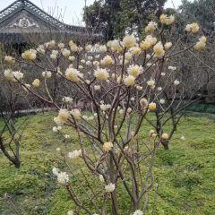 The Shi Kefa Museum User Photo