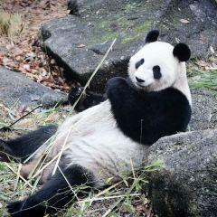 우에노 동물원 여행 사진