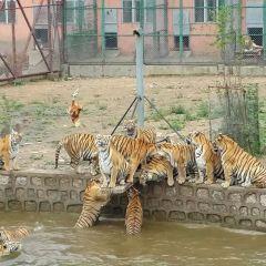 Hengdaohezi Siberian Tiger Park User Photo
