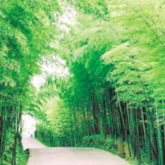 Anji Bamboo Expo Park User Photo