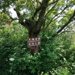 Gangshan National Forest Park User Photo