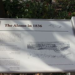 阿拉莫用戶圖片