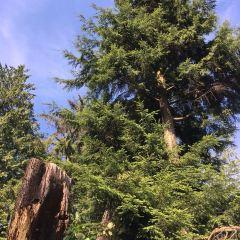 Grouse Mountain User Photo