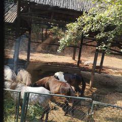 창사 생태 동물원 여행 사진