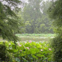 Gaoyou Lake Reed Wetland Park User Photo