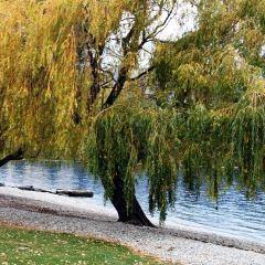 Lake Wakatipu用戶圖片